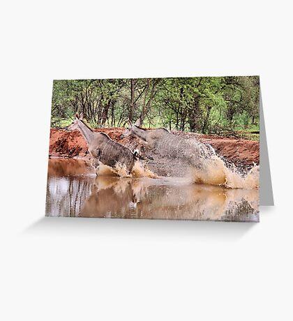 TRAGELAPHUS STRESTREPSICEROS (Kudu) Greeting Card