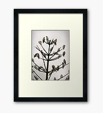 Perched up high Framed Print