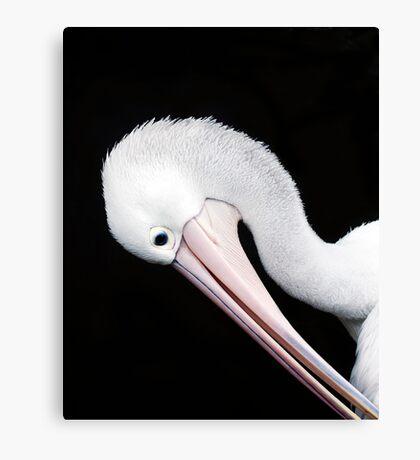 Curves - pelican portrait Canvas Print