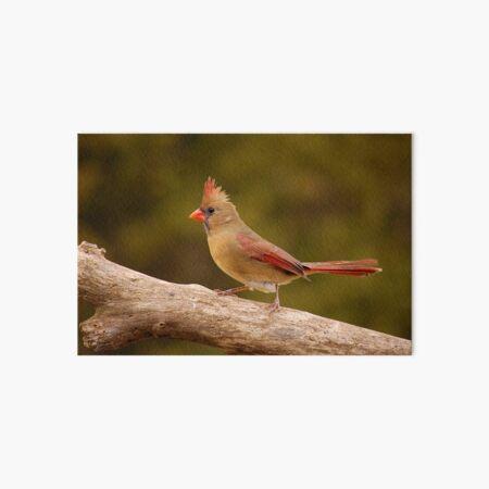 The Cardinal strut Art Board Print