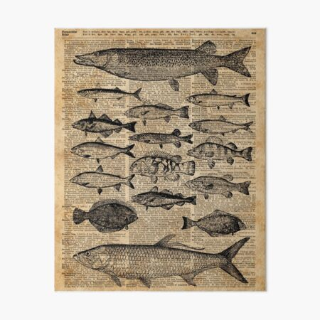 Fish on a bike goldfish riding dictionary page art print vintage gift book G24