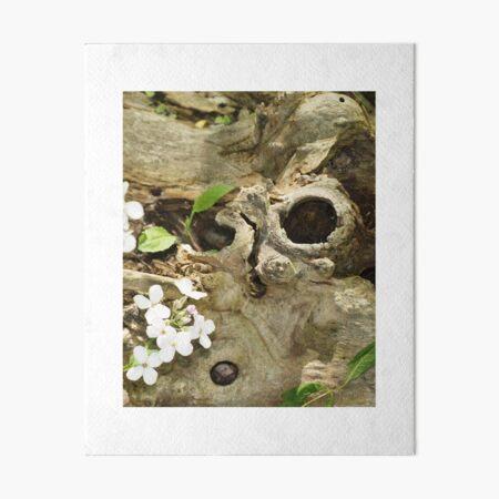 Sydenham Florals 200 Art Board Print