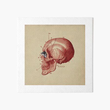 CANTO DE GOLONDRINAS COMO METAL CRUDO (vr.5) Art Board Print