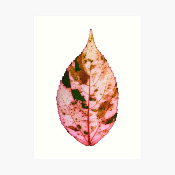 single Autumn leaf Art Print