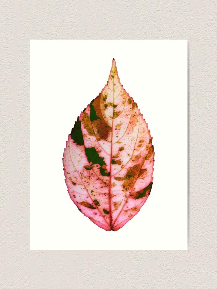 Alternate view of single Autumn leaf Art Print