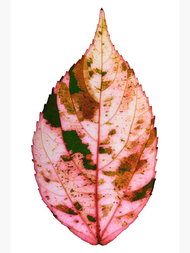 single Autumn leaf by fardad