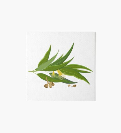 Eucalyptus twig with leaves, flowers and seeds Art Board Print