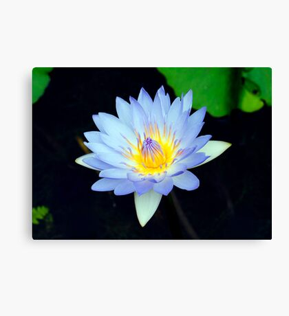 Blue - waterlilly Canvas Print