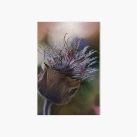 Marvelous (from wild flowers collection) Art Board Print