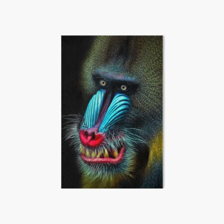 Mandrill Art Board Print