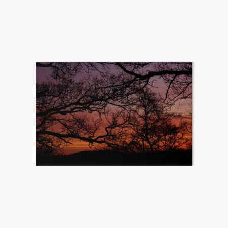 Sunset Branches Art Board Print