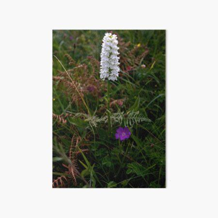 Irish White Orchid, Inishmore Art Board Print