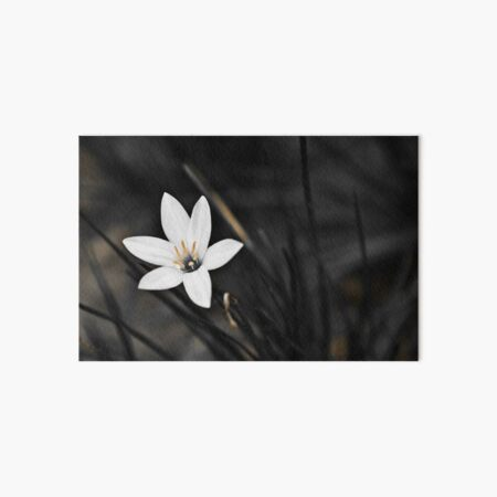 White on black flower Art Board Print