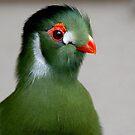 """I KNOW...I'M A BIG BIRD!' by FSULADY"