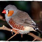 BIRD IN AVIARY by FSULADY