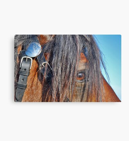 I have a crush on you........ Metal Print