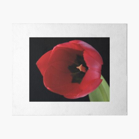 Tulip Art Board Print