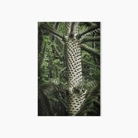 Monkey Puzzle Tree Art Board Print