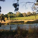 The Pinot Patch - Adelaide Hills Wine Region - Fleurieu Peninsula by MagpieSprings