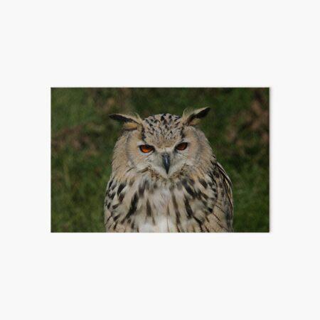 Portrait of a Siberian Eagle Owl Art Board Print
