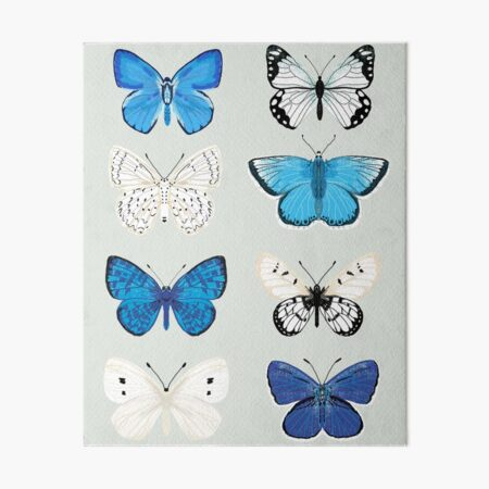 Lepitoptery No. 2 - Blue and White Butterflies and Moths Art Board Print
