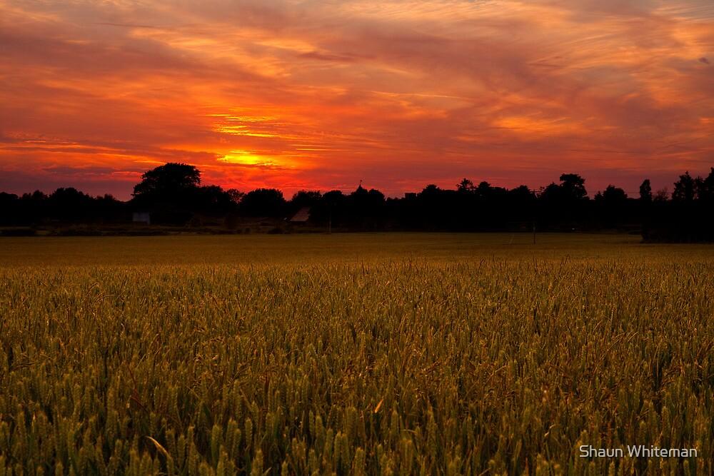 Golden crops at sunset by Shaun Whiteman