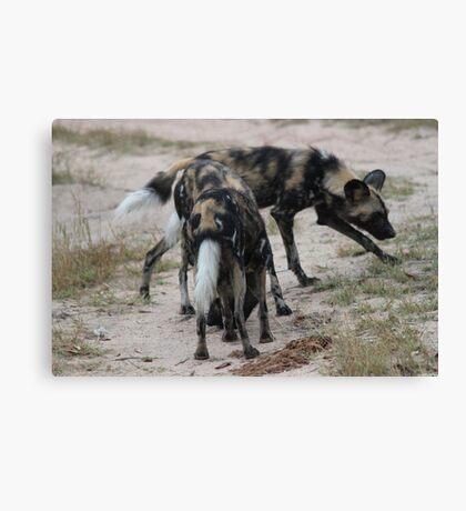 Wild dogs Canvas Print