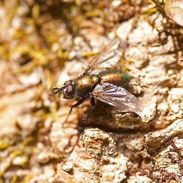 Green bottle true fly by jon77lees