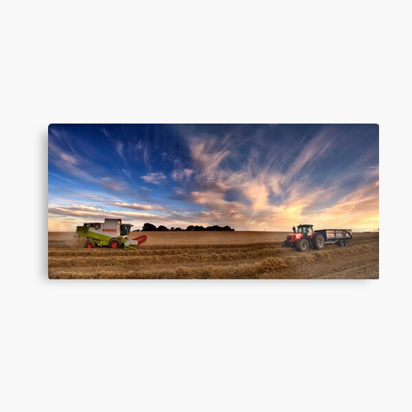 Harvesting barley, Norfolk, UK Metal Print