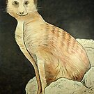 Monty Meerkat by Scott Plaster