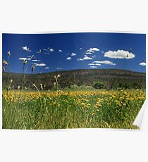 Springtime In Hat Creek Poster