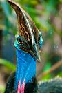 Southern Cassowary Bird by Renee Hubbard Fine Art Photography