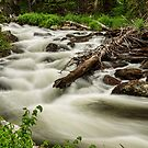Flowing Rocky Mountain Stream by Bo Insogna