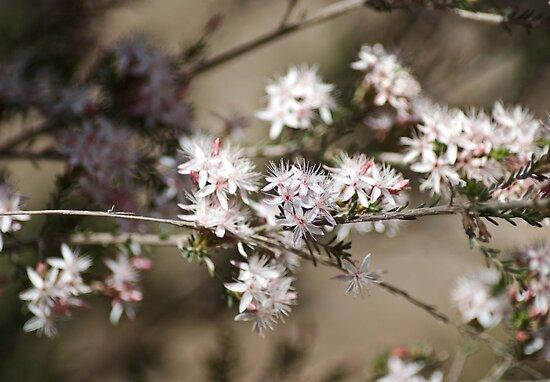 Wildflowers von garts