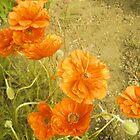 Orange Poppies by Vitta