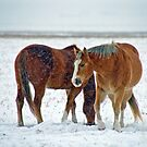Equine Winter by Jerry Walter