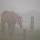 Horse in the Fog by Jerry Walter