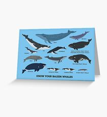 Know Your Baleen Whales Greeting Card