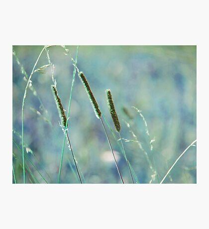 summer grass 22 Photographic Print