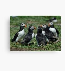 Puffin water cooler moment Canvas Print
