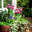 Tulips at the Windowe by Kathy Weaver