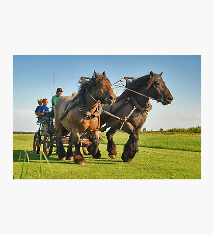 A ride with horses and cart Photographic Print