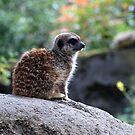 Zoo Citizen b by Janone