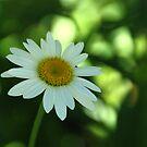 Shaded Flower by Vonnie Murfin