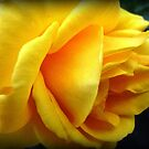 Vibrant Yellow - Spring 2009 by EdsMum
