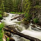Pine Tree Forest Creek Portrait by Bo Insogna