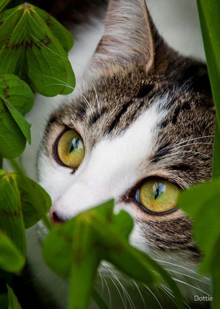 Hide  and Seek by Dottie