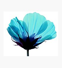 A Hue of Blue Photographic Print