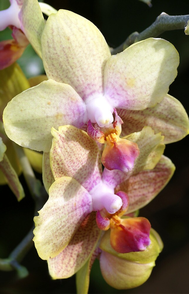 Greetings with orchid flowers by walstraasart