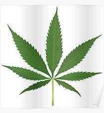 Cannabis leaf vector Poster
